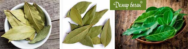 Дафинов лист и лечение на хемороиди с билки